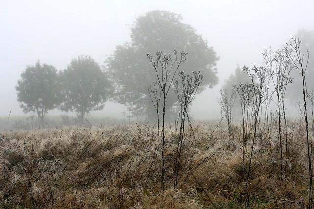 Autumn landscape after the harvest
