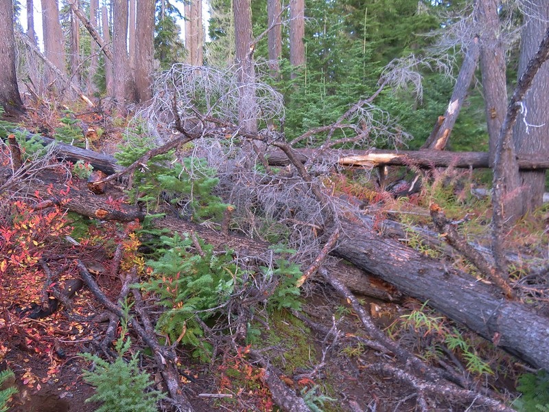 Blowdown over the Hand Lake Trail