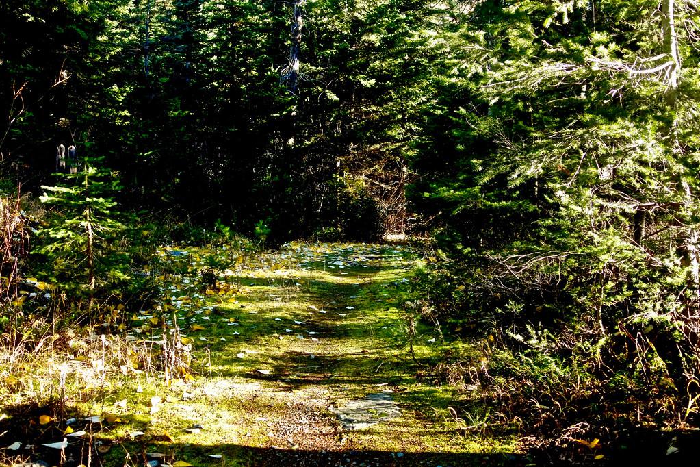Cabin Lake trail 6