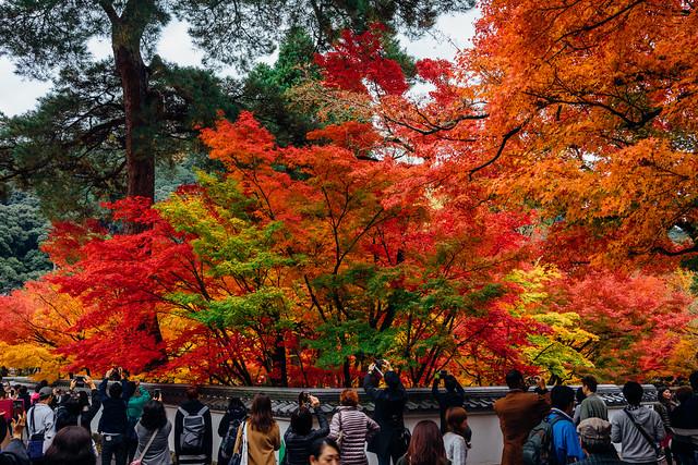 Kyoto_Eikando_99