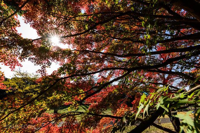 超広角レンズのAF-S NIKKOR 14-24mm f/2.8G EDメインに紅葉撮影