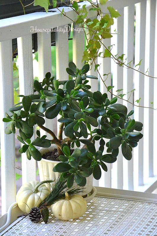 Back Porch - Jade Plant - Housepitality Designs