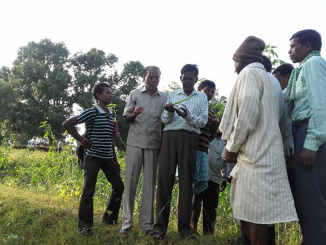 बाबूलाल दाहिया के देसी धान की फसल को देखने आये कृषि विशेषज्ञ