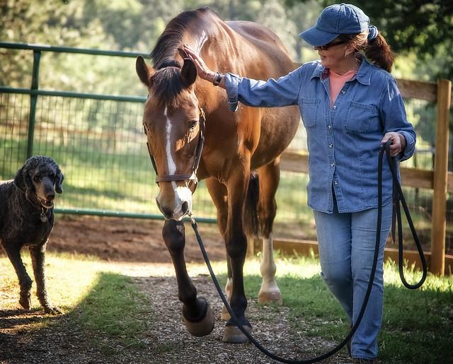 Wild Horse and Burro Adoption Stories