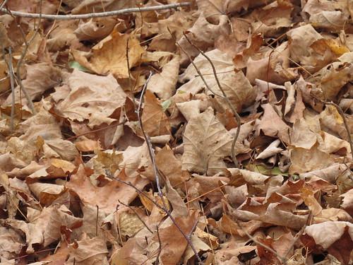 Fall Color 2016 October 20