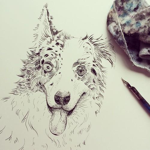 Finishing up my Australian Shepherd - Dogs Portraits Project. Thinking about making prints for my Etsy Store. #dogs #portrait #dog #australianshepherd #australian #shepherd #portraits #inktober2016 #inktober #etsy #etsyshop #dogsofinsta #etsyart #etsyarti