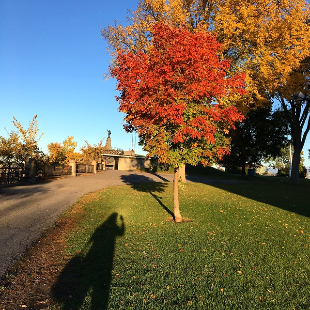The intrepid shadow photographer hunts autumn colours!