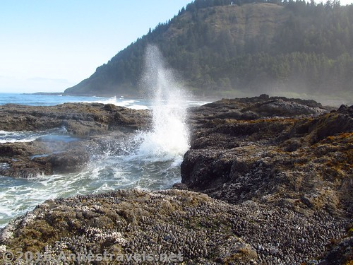 A wave hits the lava flow at Cape Perpetua, Oregon