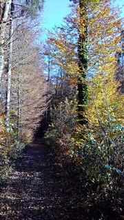 Autumn Mystery