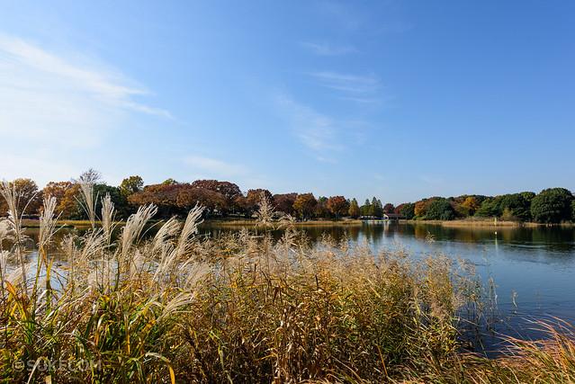 昭和記念公園最高