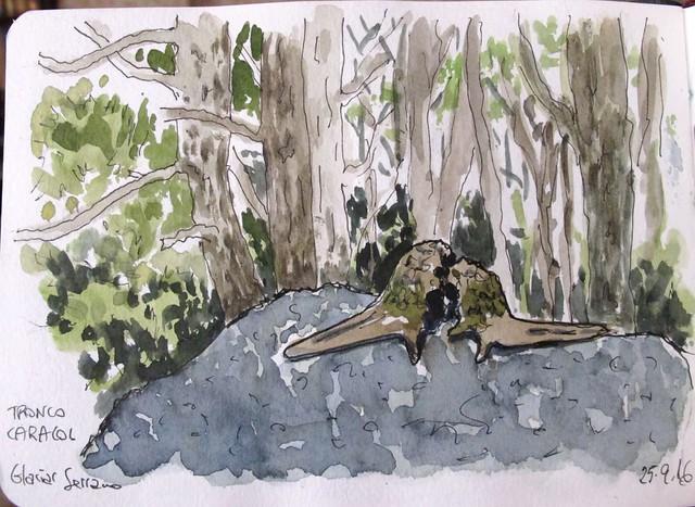 Troncos caracoles. Parque O´Higgins. Chile