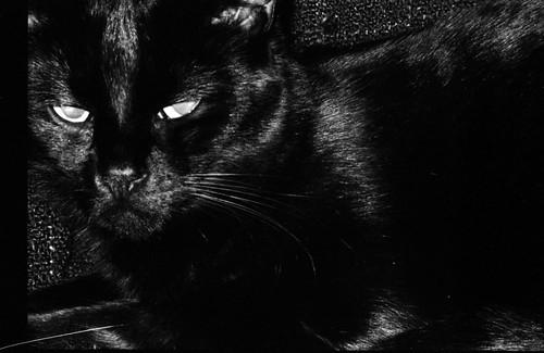 grumpy Loa