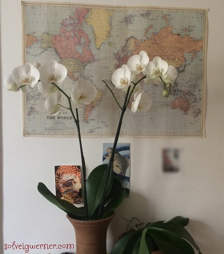 the world of orchids