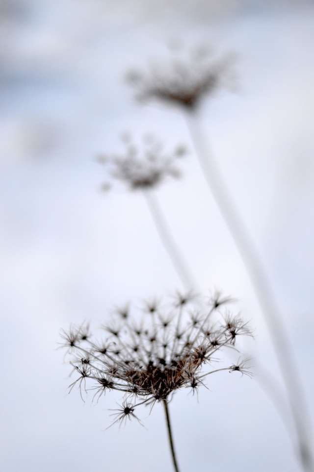 Gräser Schnee