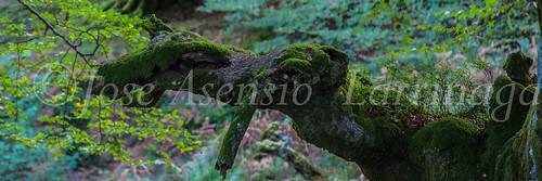 Parque Natural de #Gorbeia #DePaseoConLarri #Flickr      -1331