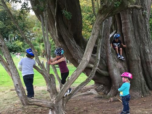 Tree monkeys