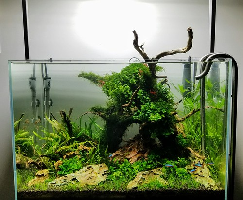 33G Aquavas Aquascape