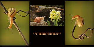 **CHIOCCIOLA** | by coach48