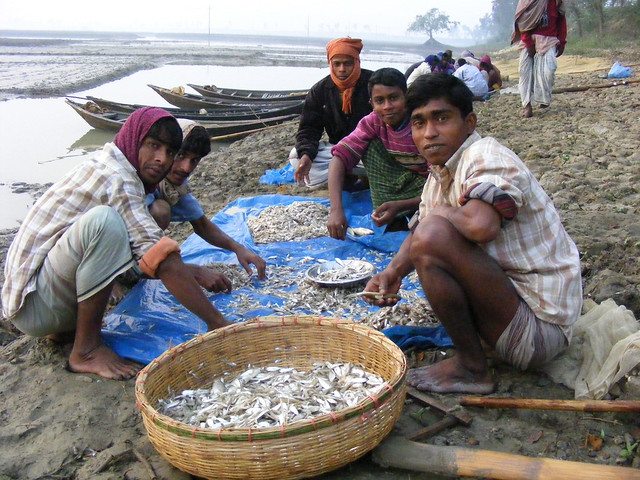 Sorting through the catch, Bangladesh. Photo by Martin Van Brakel, 2007