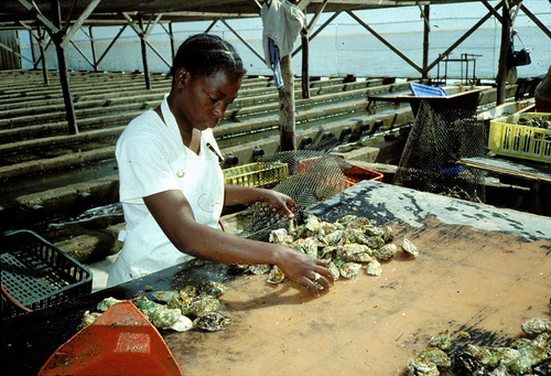 Woman drying fish, Malawi. Photo by Randall Brummett, 2002