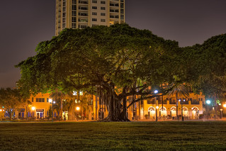 Banyan Tree at Night | by Photomatt28