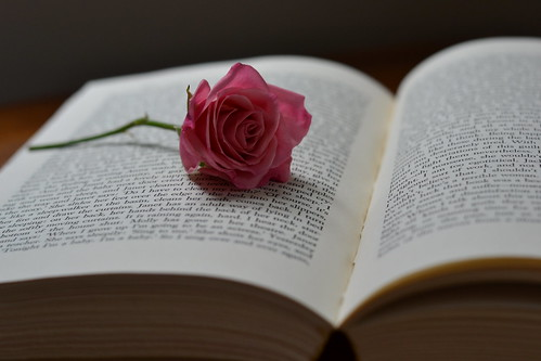 Rose on Book | by ms smartipants