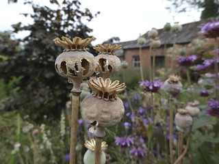 Poppy Seedheads | by James's GW Blog