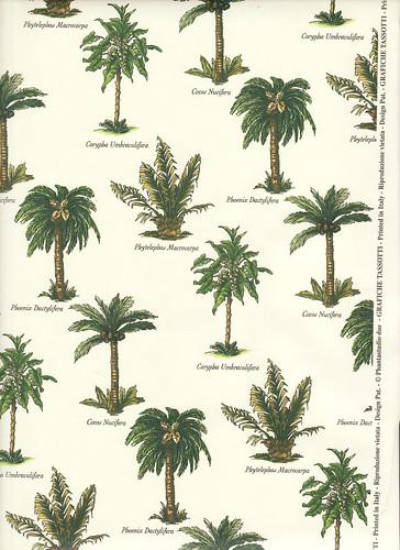 Palm tree varieties flickr photo sharing - Fir tree planting instructions a vigorous garden ...