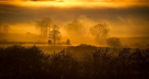 Trees in mist near Antrim town, Northern Ireland | by SIX MILE IMAGES