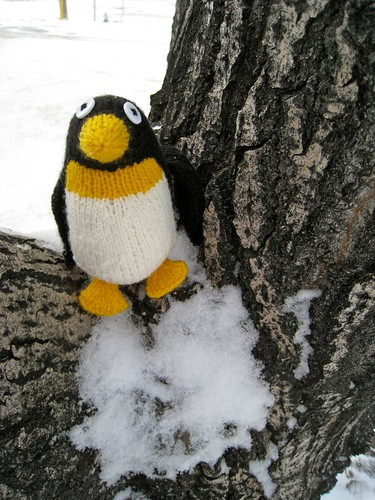 Mr. Penguin in a tree | by Fa-Linn