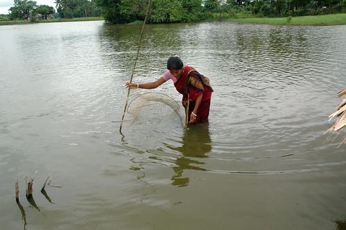 Netting fish in a pond, Bangladesh. Photo by WorldFish, 2008