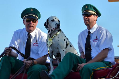 Dalmatian Dog Eye Color