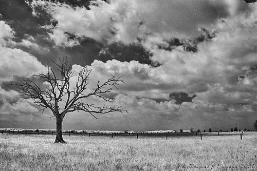 clouds & tree | by D J England