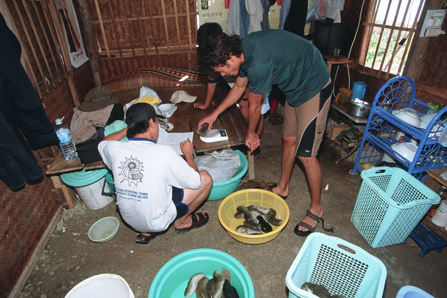 Weighing sea cucumbers, Vietnam. Photo by Dominyk Lever, 2004