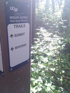 mystery on mount sutro | by nicolemartinelli_22