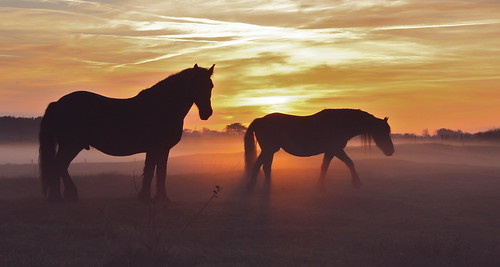 horses in fog | by The Family Dog