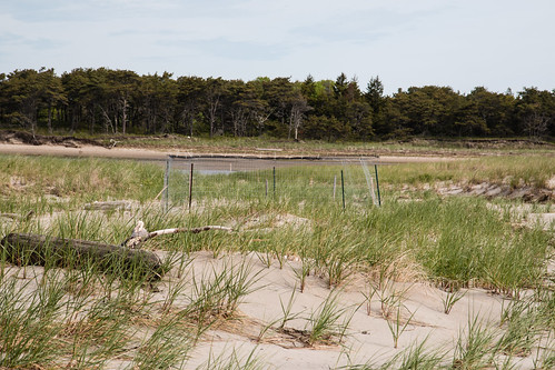 Piping Plover nest enclosure