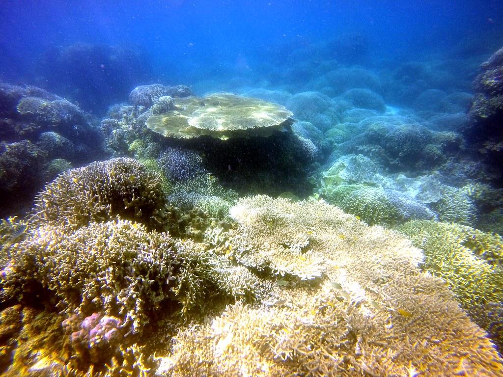FOZZ_MoalBoal_052016_TongoWay_CoralGarden