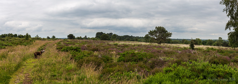 Jez on Corfe Hills nature reserve
