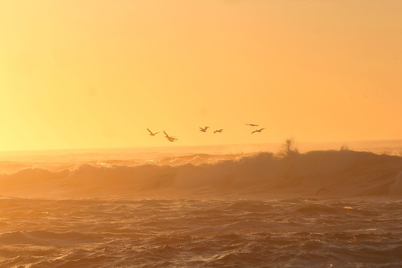 Birds, Waves, Sunset