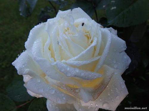 2016-06-16 19.22.42 jardins de bagatelle