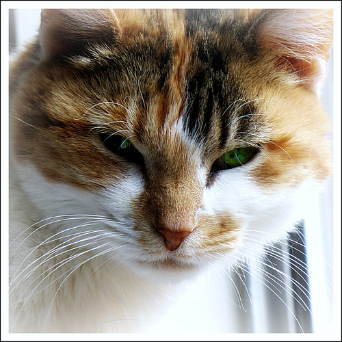 Vet X Rays Cost Cat Uk Vets  Pets