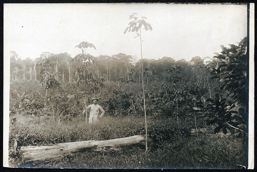 Man standing in a field with grasses and trees, possibly André Goeldi in Brazil | by Smithsonian Institution