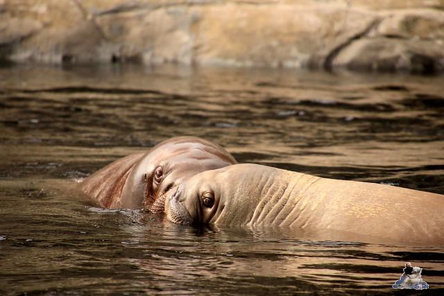 Tierpark Hagenbeck 21.05.2016  0223