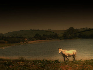 Horse-By-Lake | by fear ciun
