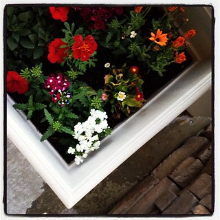 8 pm - watering my front porch planters. And thats a wrap on a picture an hour today! #10on10 | by Erin - TwoMoreSeconds