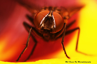 Full frame shot of a fly | by Viscount Rais