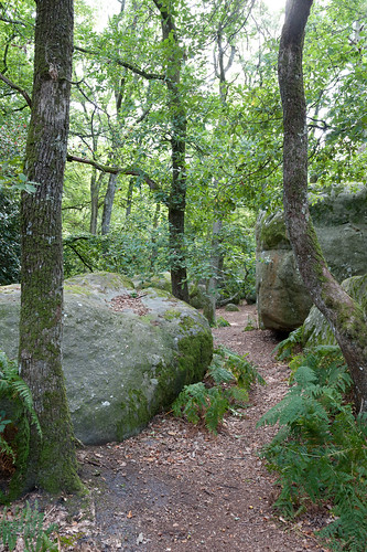 how to get to fontainebleau forest from paris
