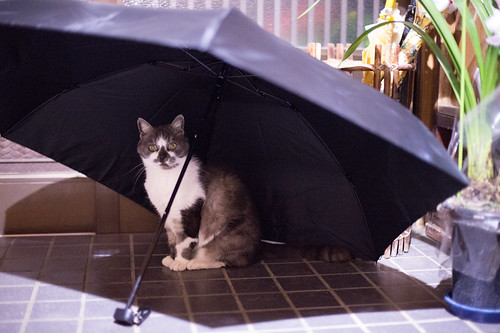 Mew, I'm ready for rainy season