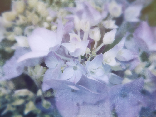 Pale purple Hydrangea done in Stackables 'Faded Bloom' formula